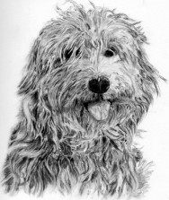 Graphite Pencil Dog Portrait by Julie A. Brown - Chelsea