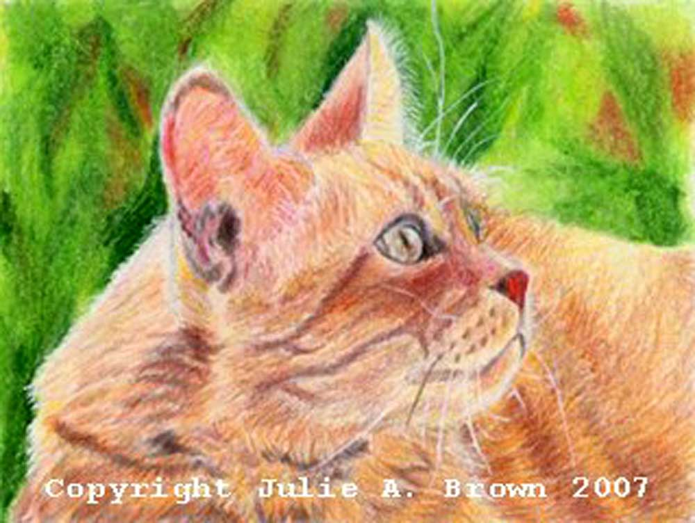B.C. - Mixed Media Cat Portrait by Julie A. Brown