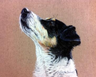 Pastel dog portrait of a Jack Russel Terrier by Julie A. Brown
