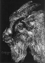 Goatee, scratch art painting on paper by Julie A. Brown