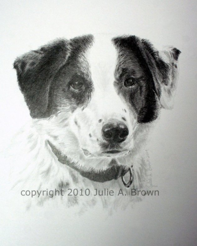Graphite Pencil Dog Portrait of a Border Collie Cross