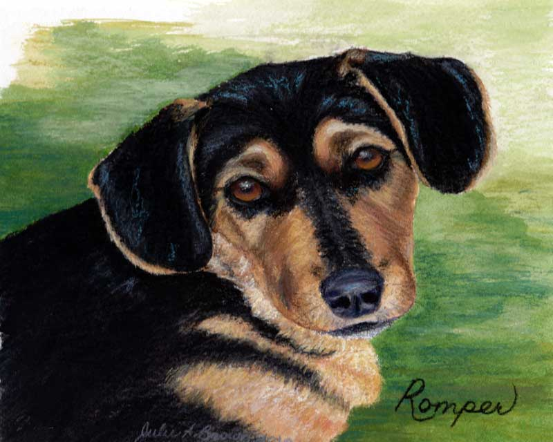 Acrylic and Pastel Dog Portrait by Julie A. Brown - Romper