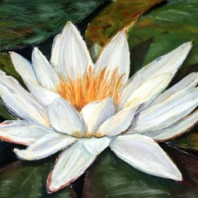 Water Lily, Pastel Painting by Julie A. Brown