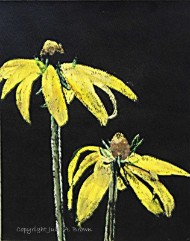 Yellow Coneflowers - Giclee eco-friendly fine art reproduction by Julie A. Brown